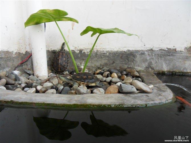 家庭阳台小鱼池设计图内容家庭阳台小鱼池设计图