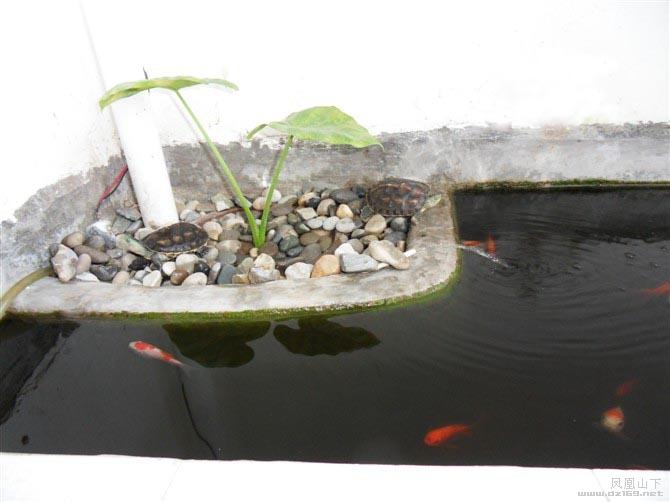 自制陽臺魚缸設計