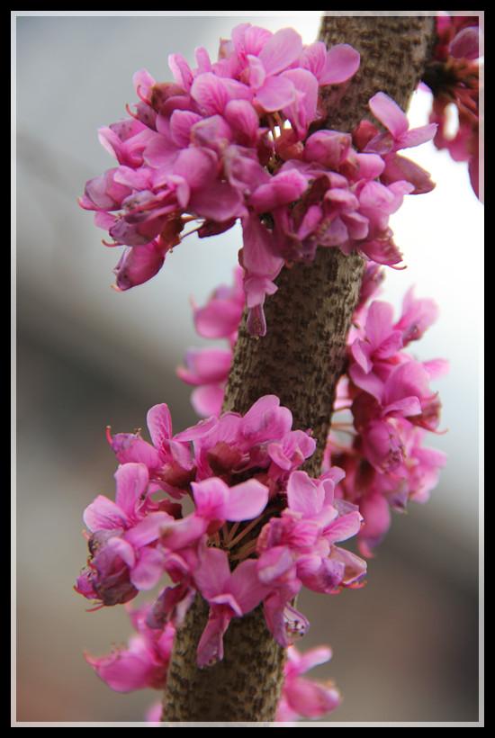 春天的作业:海棠,金莲,桃花,小米花与菜花.