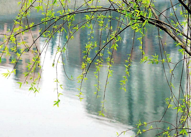 河边树风景图片