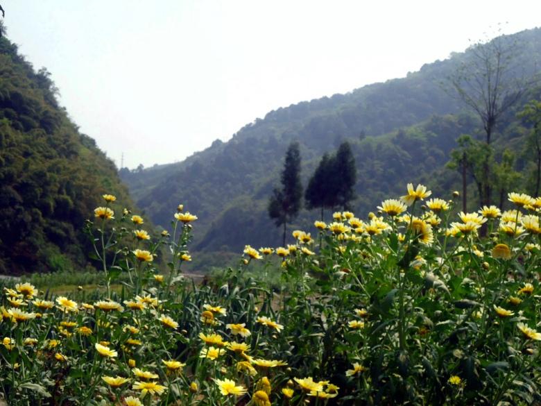 仙女山风景旅游区地处达川碑