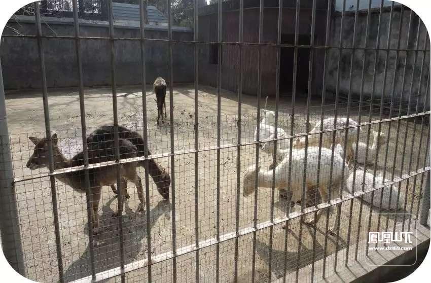 达州东辰国际学校小型动物园利用我校良好的生态环境优势,常年