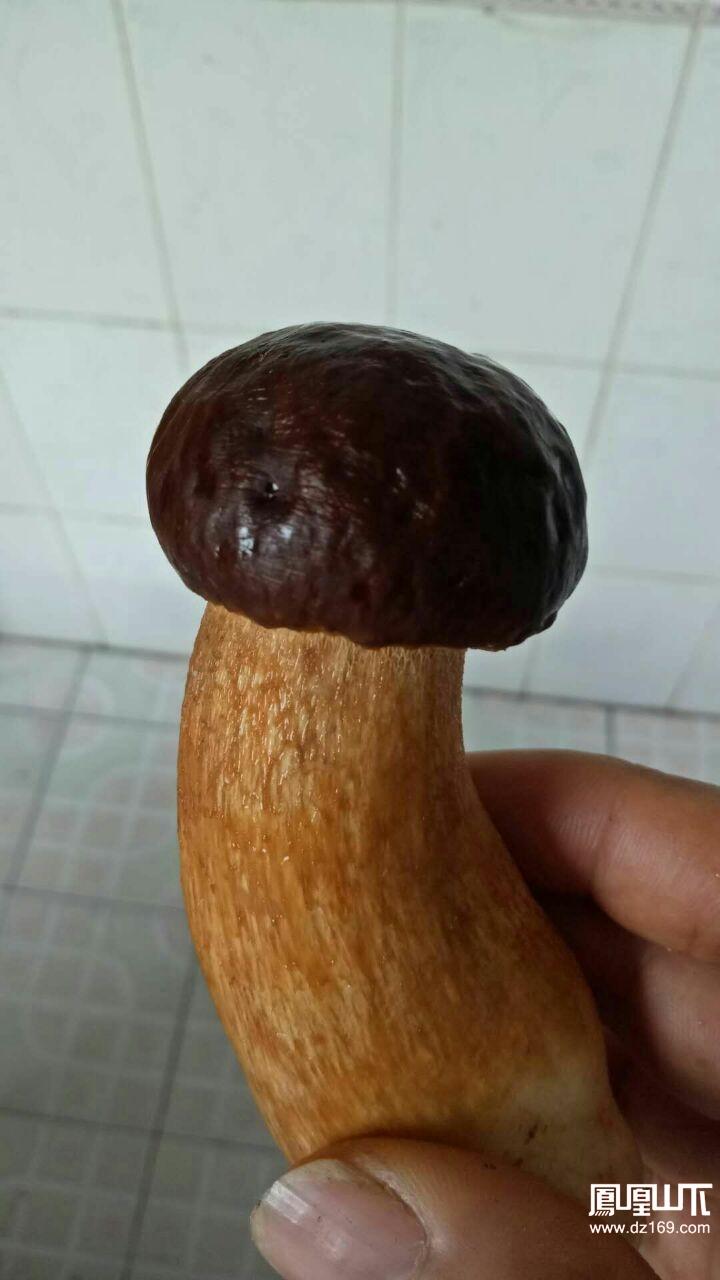 这是个什么菌?有能识别的山友吗?