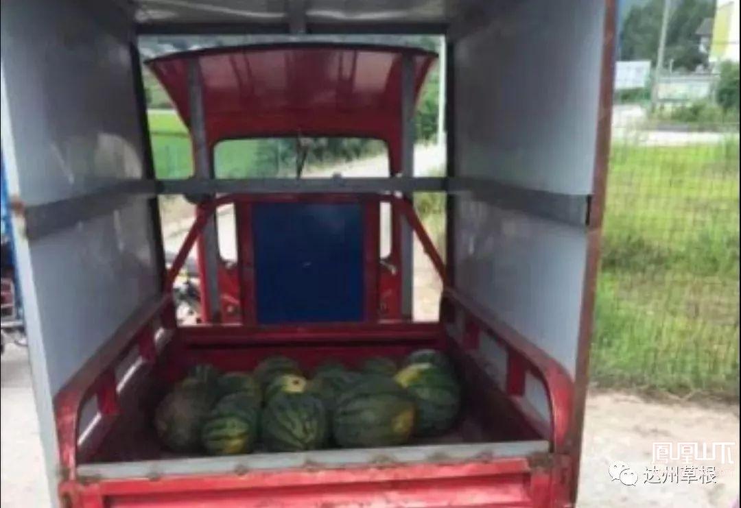 """丢人!渠县两农妇开三轮车偷西瓜称为""""捡""""西瓜,被逮到后还不认帐!"""