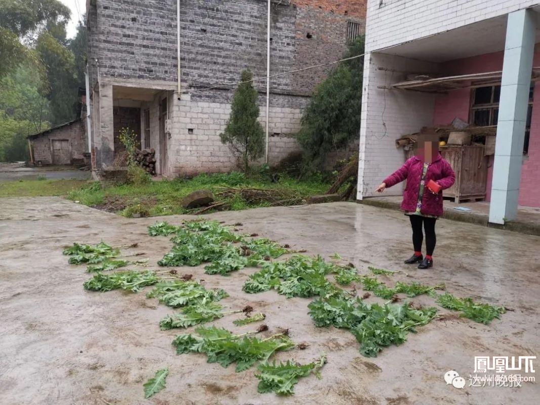 開江這家人竟把這個東東當菜吃……結果警察找上門來了!