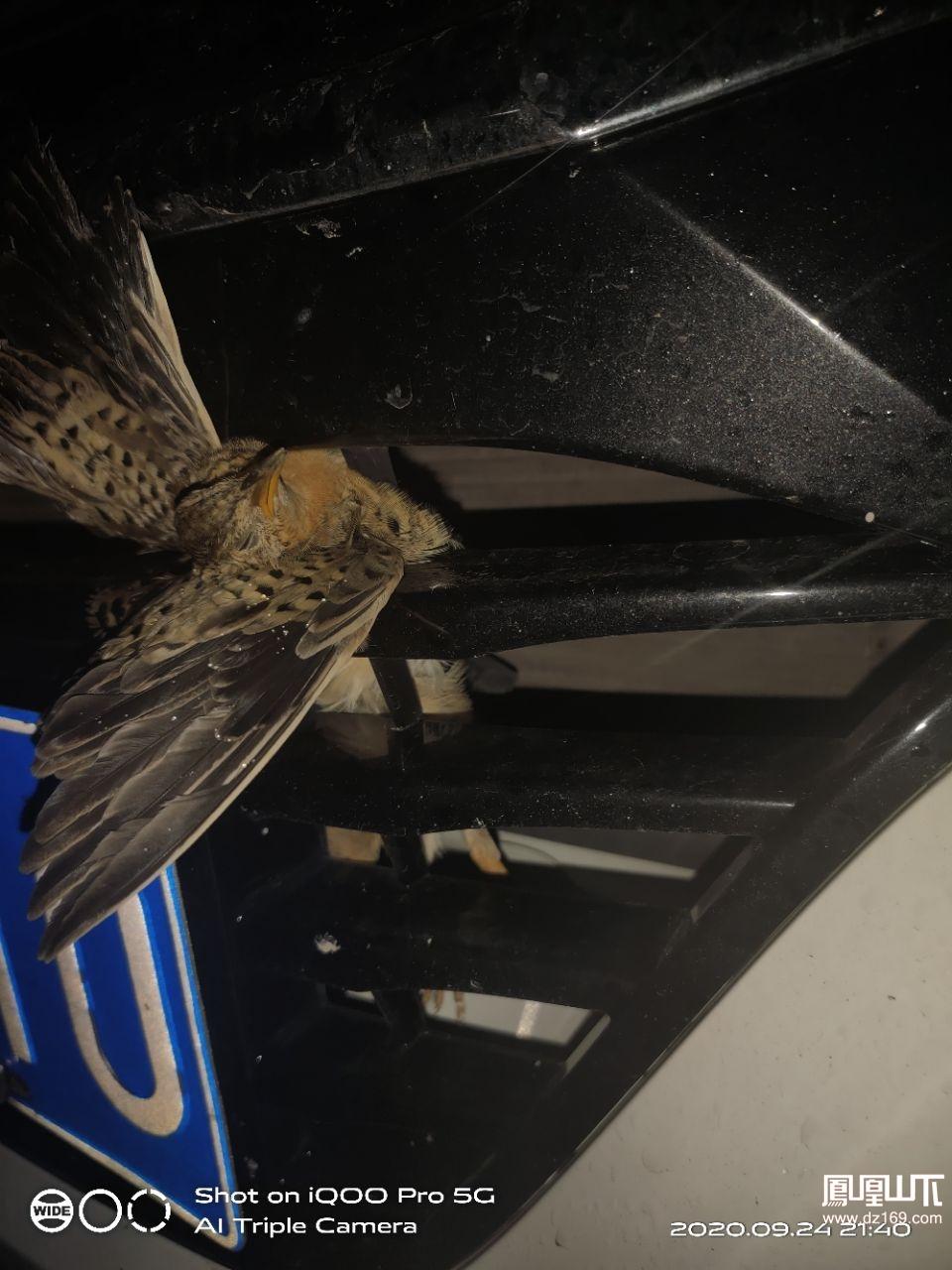 撞死个麻雀有不祥之兆吗?