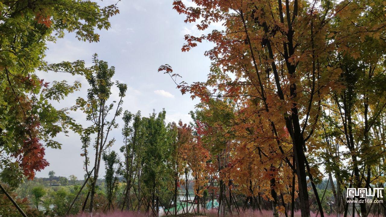达州莲花湖枫叶红了