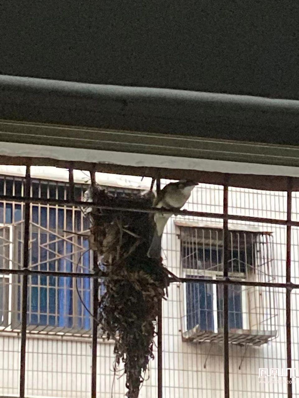 有谁认识这是撒子鸟