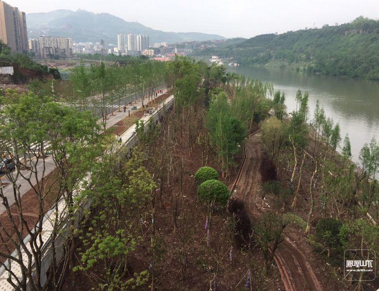 塔沱滨河公园三期工程建设进入收尾阶段